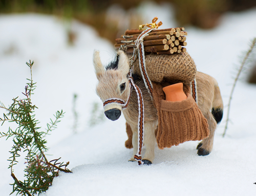 Donkey's Day Out in Snow